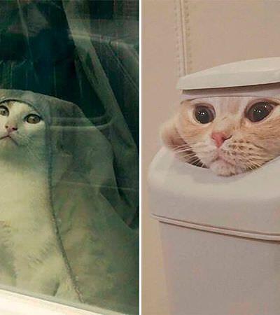 Pessoas recriam a cena mais selvagem de 'Game of Thrones' com seus gatos e o resultado é muito fofo