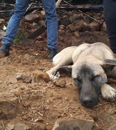 Em meio aos escombros, cão espera por dono morto em terremoto no México