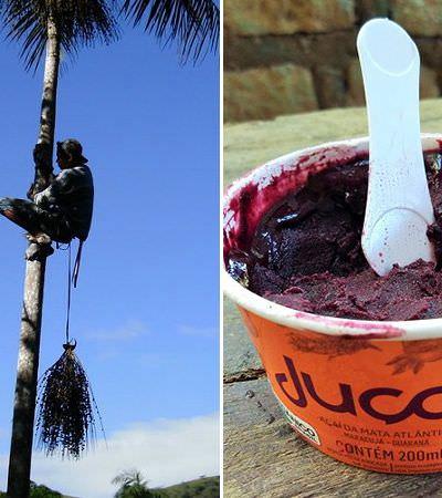 A incrível descoberta de um primo carioca do açaí