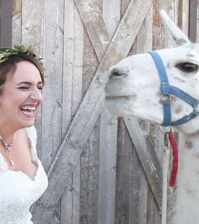 O momento em que lhamas 'invadem' um casamento e deixam a noiva (ainda mais) feliz