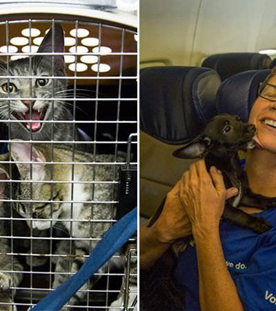 Cia aérea enche cabine com animais para salvá-los de tempestade nos EUA e essas fotos mostram a alegria dos bichinhos