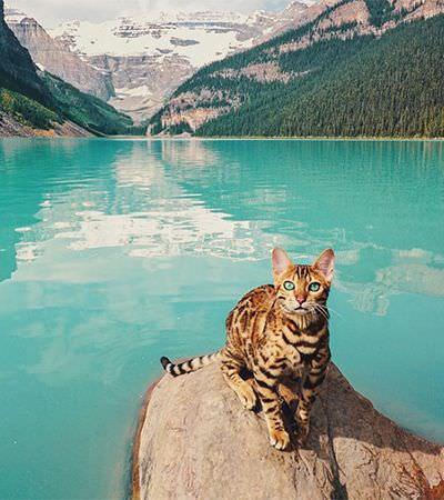 Você precisa conhecer Suki, o gato mais aventureiro e viajado dos últimos tempos