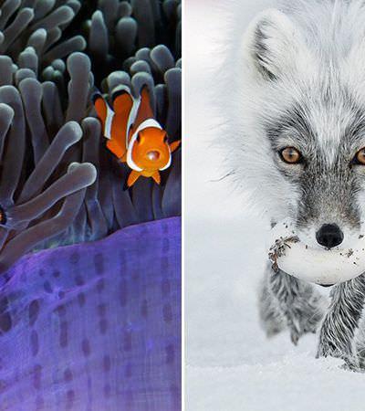 Essas são as imagens finalistas do concurso de fotografia de vida selvagem de 2017 e são maravilhosas