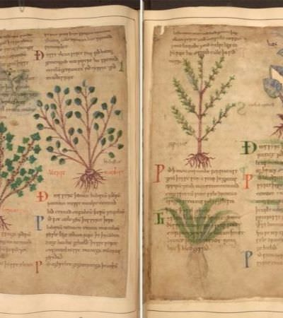Manuscrito ilustrado de ervas medicinais escrito há mil anos (!) é disponibilizado online