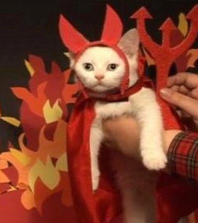 Você pode não acreditar, mas o signo dos gatos diz muito sobre eles