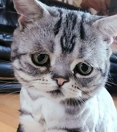Conheça Luhu, a gatinha com a cara mais triste (e fofa) do mundo
