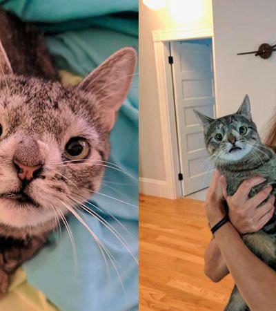 Conheça Maya, a gatinha fofa que quase foi morta por ser 'feia'