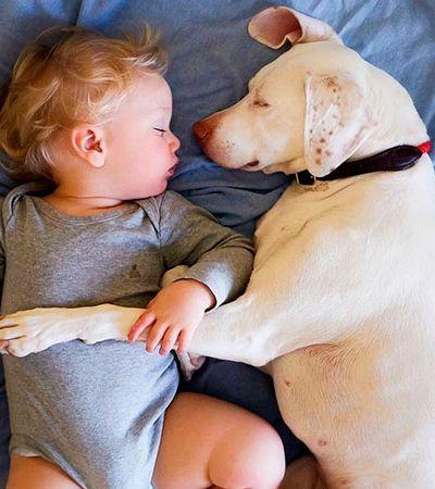 Após vida de abusos, cão não deixa ninguém se aproximar a não ser seu novo irmãozinho