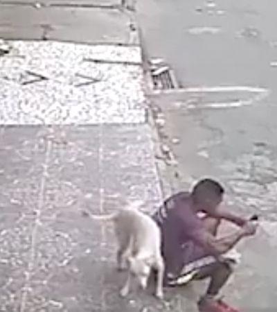 Após vídeo viralizar, rapaz adota cãozinho que fez xixi nele