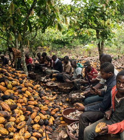 Produção de chocolate devasta quase 80% de florestas em Gana e Costa do Marfim