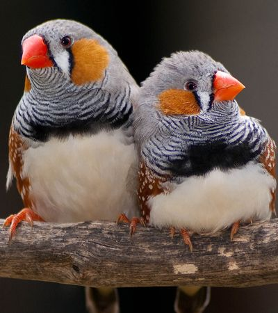 Cientistas já preveem o que pássaros vão 'falar'. E querem fazer o mesmo com você