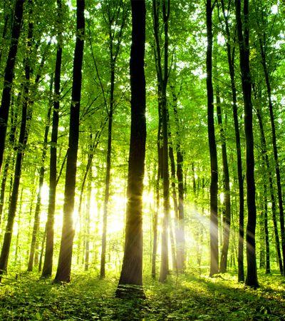 Extensão para o Chrome planta árvores cada vez que você faz uma busca