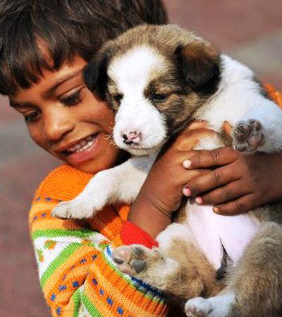 Compaixão por animais vira matéria em escolas púbicas e privadas na Índia