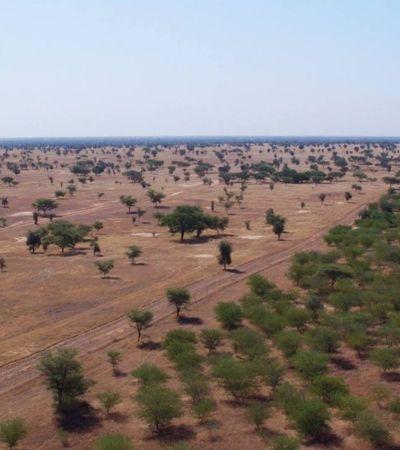 Africanos se unem para criar muro de árvores 8 mil km de comprimento e 15 km de largura
