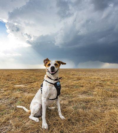 Esta é Joplin, a cachorrinha que caça tempestades com seu dono fotógrafo
