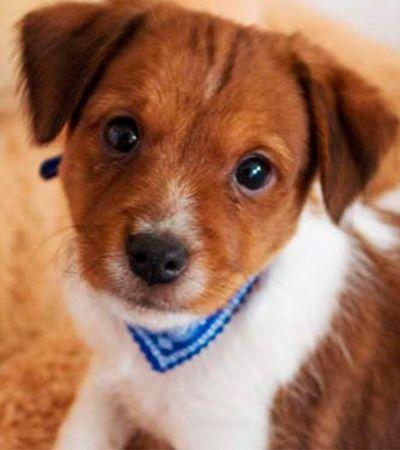 Vitória! Na Califórnia, lojas só poderão vender animais que tiverem sido resgatados