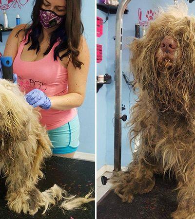 Ela abriu o pet shop no meio da noite para este 'banho e tosa' emergencial