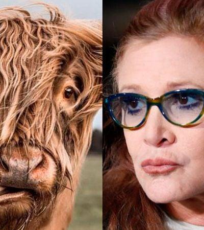 Carrie Fischer mandou língua de vaca para produtor para vingar amiga assediada