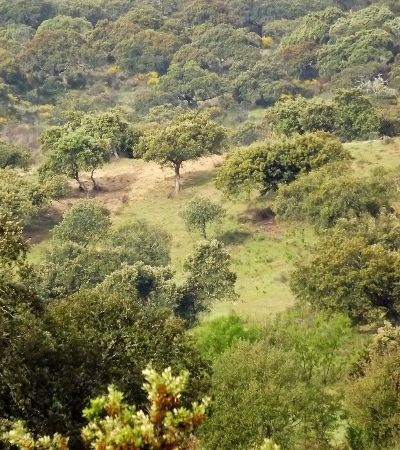 Para compensar incêndios, portugueses podem plantar árvores pelo correio
