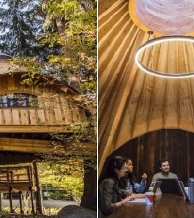Por que a Microsoft decidiu criar incríveis escritórios em casas na árvore