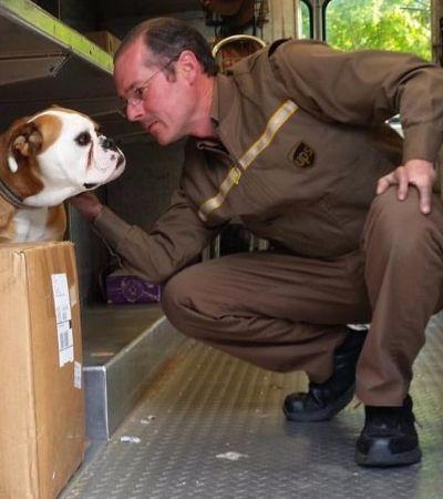 Aqui estão as provas de que, na verdade, carteiros e cachorros são ótimos amigos