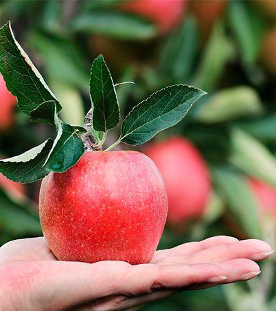 Descobriram como remover pesticidas das frutas da forma mais simples e efetiva