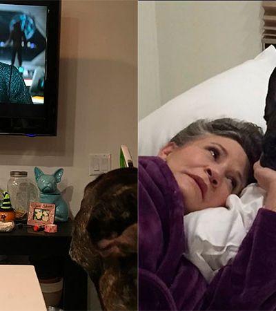 Muito amor: Cãozinho de Carrie Fisher assiste a mãe em novo trailer de Star Wars