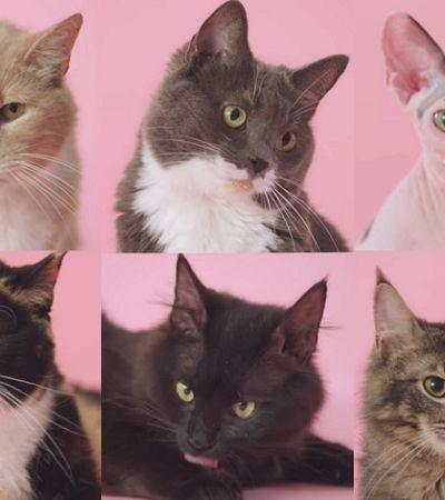 Campanha usa gatinhos para difundir educação sexual feminina