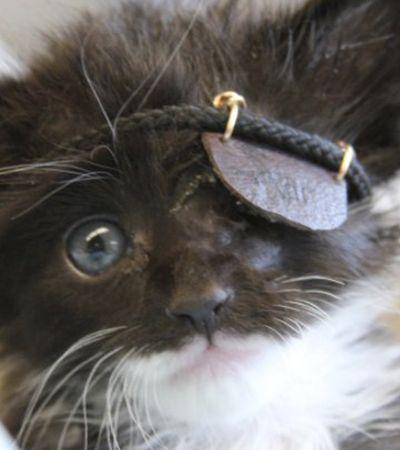 Gatinho resgatado sem um olho ganha tampão e vira gato pirata