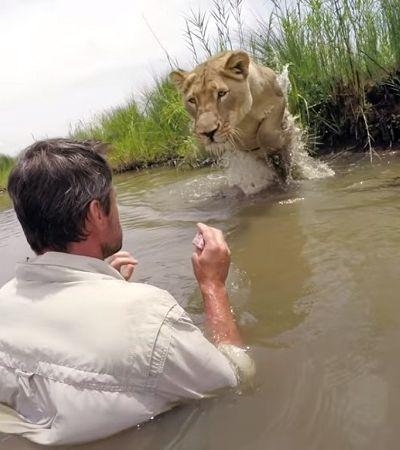 O encontro deste homem com a leoa que salvou há 7 anos teve um desfecho de tirar o fôlego