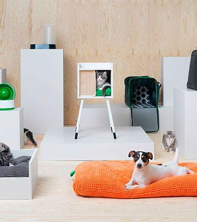 Cama, arranhador, pote de ração… IKEA lança linha exclusiva e estilosa para pets