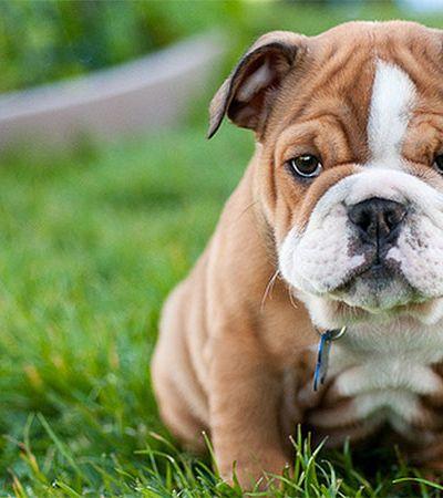 Humanos gostam mais de cachorros do que de gente, aponta estudo científico