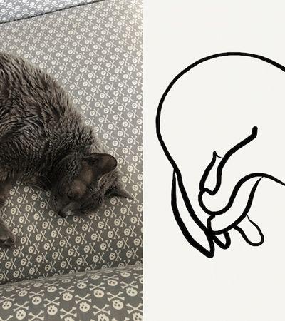 Post colaborativo transforma memes clássicos de gatos em ilustrações minimalistas