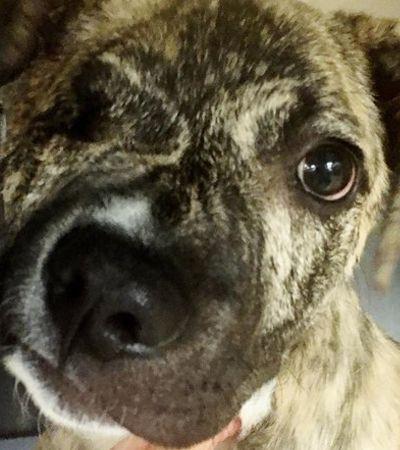 Cão com focinho torto tinha eutanásia marcada até que encontrou este veterinário
