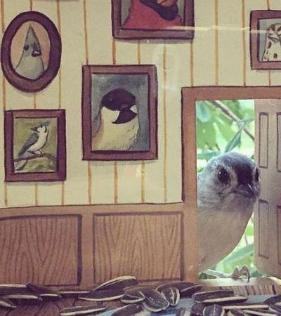 Estes passarinhos curtindo a casinha feita especialmente para eles são amor puro