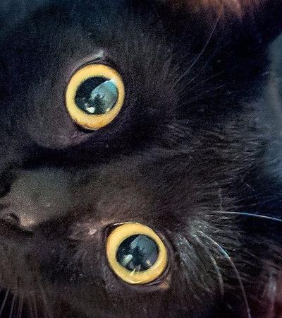 7 superstições com gatos espalhadas pelo mundo que não fazem o menor sentido