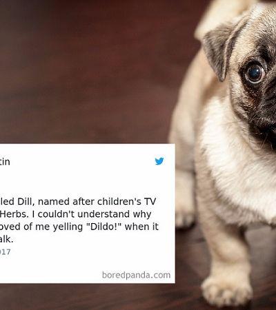 Quem nunca? Seu pet tem um nome lindo, mas acaba virando um apelido bizarro