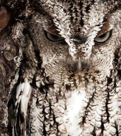 Você é capaz de encontrar as corujas escondidas nestas fotos?