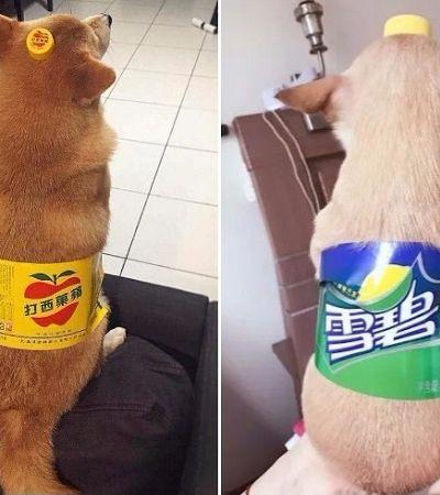 O novo meme da internet é transformar seu cachorro em garrafas de refrigerante
