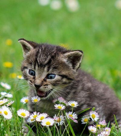 ONG de adoção de gatinhos passa a receber contribuição através de moedas virtuais
