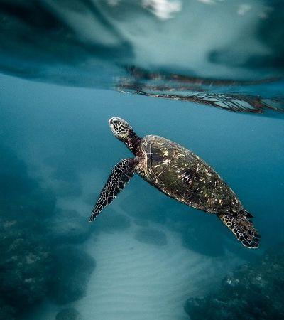 Uma das ilhas mais isoladas do mundo agora é também uma das maiores reservas marinhas do planeta