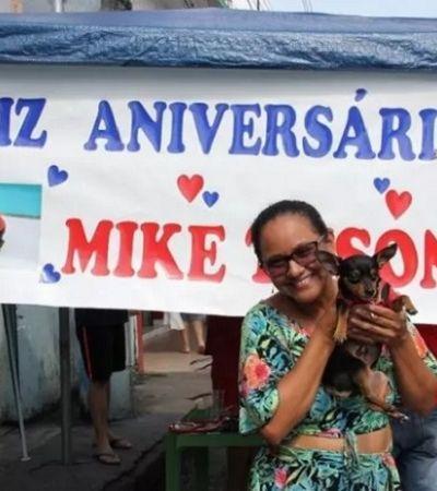 O pinscher Mike Tyson fechou um bar para comemorar seu aniversário de 3 anos