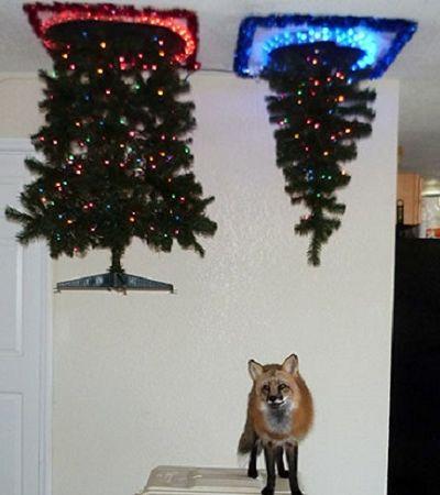 Estas pessoas não medem esforços para proteger suas árvores de Natal dos pets
