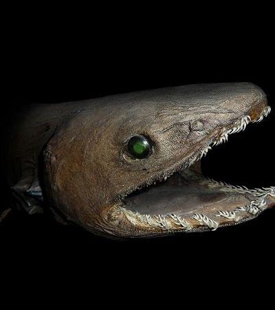 Tubarão pré-histórico é encontrado em Portugal