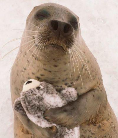 Esta foca ficou completamente apaixonada por uma versão em pelúcia dela mesma