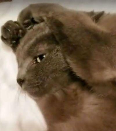 Este gatinho se recusa a ouvir seu humano pedindo que ele levante da cama