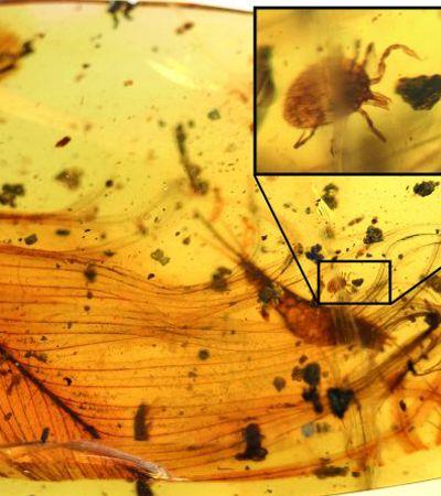 Fragmento de âmbar com sangue de dinossauro é encontrado e sabemos como isso pode acabar