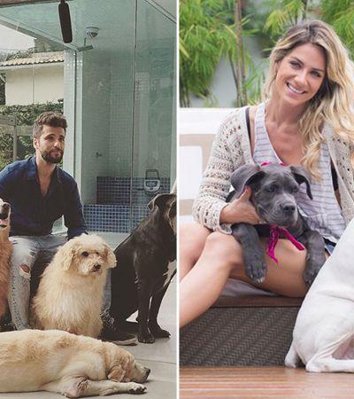 Bruno Gagliasso e Giovanna Ewbank cedem sítio para Ibama libertar animais silvestres