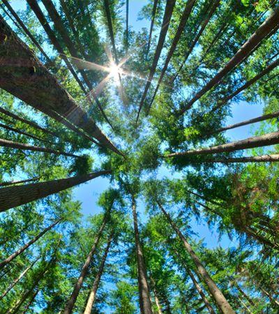 ONU oferece curso online e gratuito sobre ecossistemas terrestres