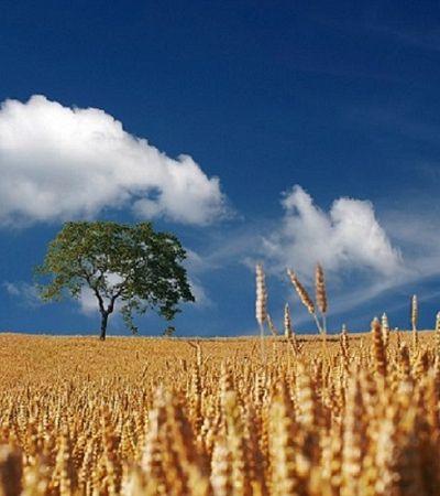Projeto de lei quer proibir agricultores de produzir, armazenar e distribuir sementes